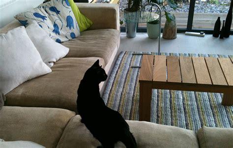 clean urine from sofa clean cat urine leather sofa farmersagentartruiz com