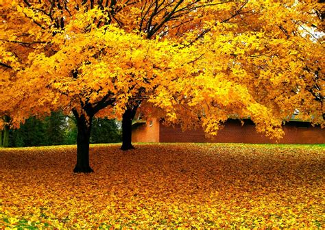 fall house nature landscape trees leaves yellow fall house