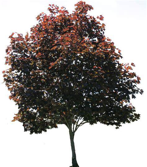 darkest hour naples fl tree png 01 by thy darkest hour deviantart com on
