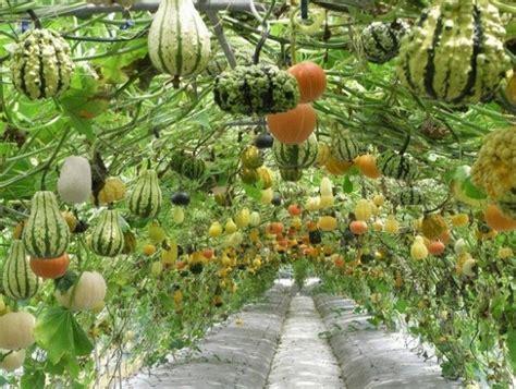 Veggie Garden Arch How To Build A Squash Arch Home Design Garden