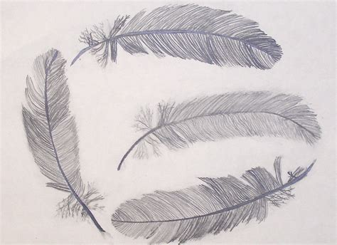 Drawings Of by Clague S Fabulous Students Nature Drawings
