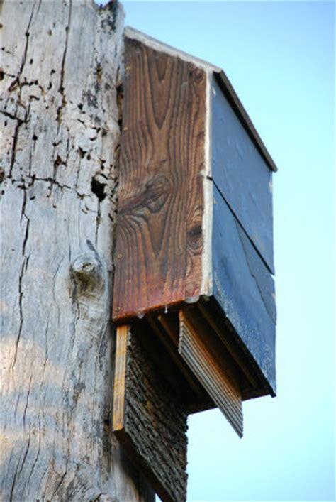 Gardeners Supply Bat House Attract Bats To Your Garden With A Bat House Dave S Garden