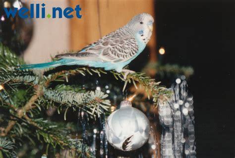 wann ist bescherung wellensittich bilder monatsgalerie weihnachtsgalerie 2013
