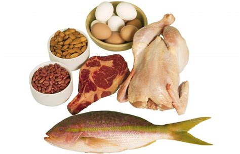 protein rich foods co relation of protein rich diet sports nutrition for