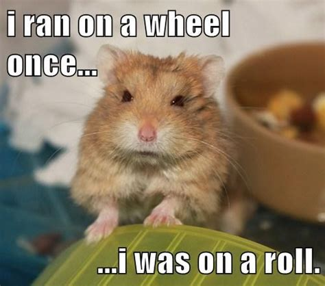 Hamster Meme - 40 very funny hamster meme images and pictures
