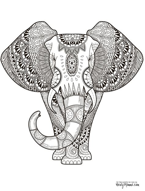 detailed elephant coloring pages 11 free printable adult coloring pages adult coloring