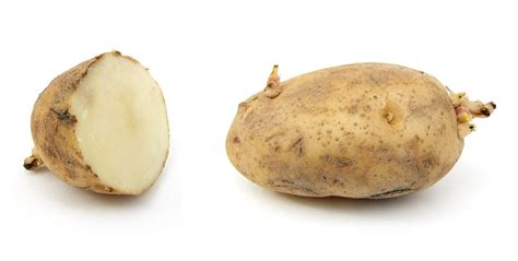 Potato Picture by File Russet Potato Cultivar With Sprouts Jpg