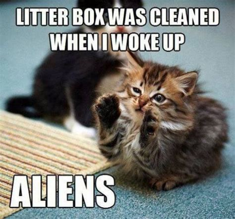 Clean Cat Memes - yep aliens cleaned the kitty s litter the honorable t