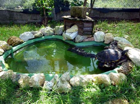 vasche per tartarughe d acqua dolce vademecum