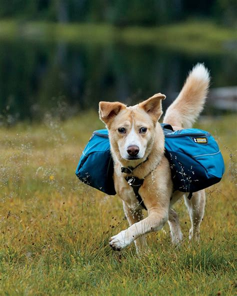 puppy book bags the modern bark tips find your ideal backpack 2016 5 best
