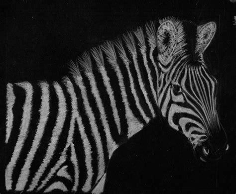 fotos en blanco y negro animales blanco y negro manumug s weblog