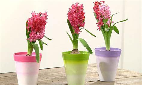 bulbi in vaso coltivare i bulbi in vaso come fare e come curarli dopo
