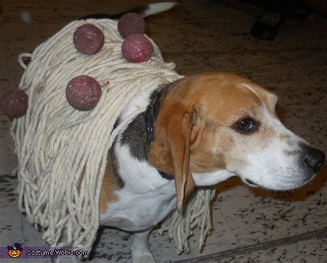 can dogs eat spaghetti image gallery spaghetti