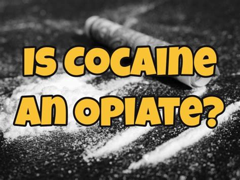 Cocaine For Opiate Detox by Is Cocaine An Opiate West Palm Best Florida