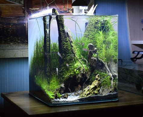 small aquarium aquascape best 25 nano aquarium ideas on pinterest aqua aquarium nano tank and plant fish tank
