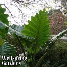 1000 images about wellspring gardens on