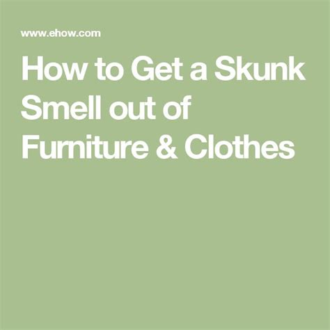 how to get skunk smell out of house and dog 1000 ideas about skunk smell on pinterest skunk smell remover skunk smell in house