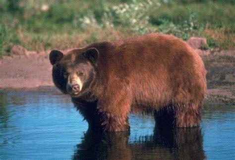 Fotos Animales Silvestres   los animales silvestres animalesmascotas