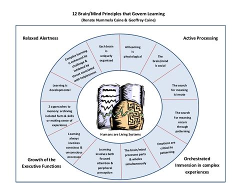 caine amp caine 12 brain mind principles of learning