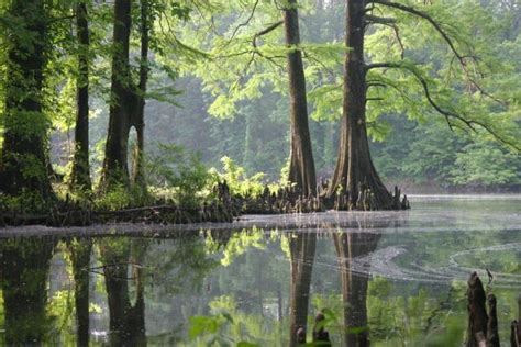 image gallery mississippi nature