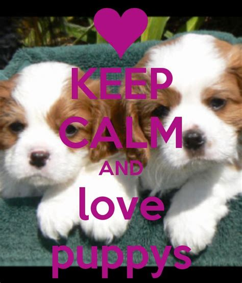 where can i find free puppies in my area 17 images about puppys on keep calm pet sitting and my birthday