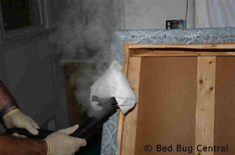 steaming bed bugs bed bugs 101 what should i do with my bed bedbug central