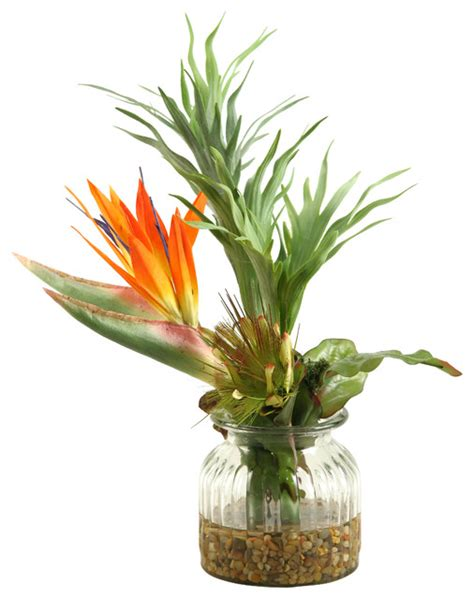 Bird Of Paradise Flower Arrangement Vase by Touch Bird Of Paradise With Royal Protea And Staghorn Fern Glass Vase Tropical