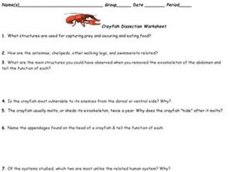 Crayfish Dissection Worksheet by Crayfish Dissection Worksheet 6th 7th Grade Worksheet