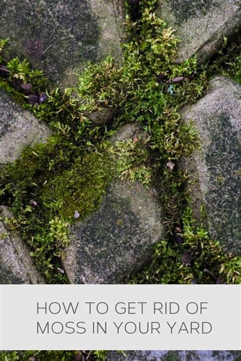 how to get rid of moss on patio stones pin by sheryl glasel on gardening