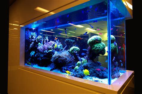 beautiful coral aquarium design ideas for home interior