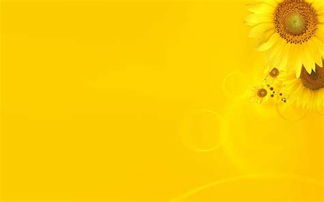 Yellow Wedding Background Images by Hd Plain Backgrounds For Photoshop Background Ideas