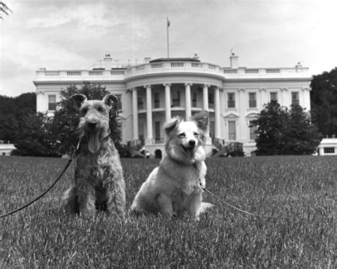 first dog white house first dogs the long legacy of dogs in the white house the dogington post