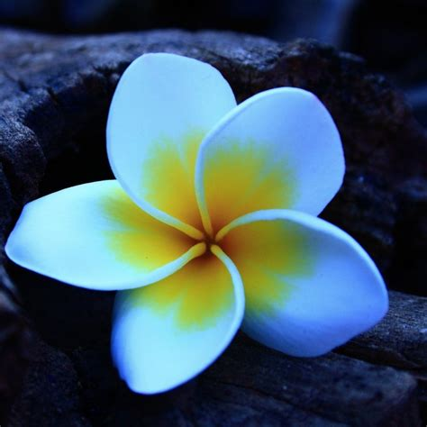 white petals  yellow spots beautiful flower