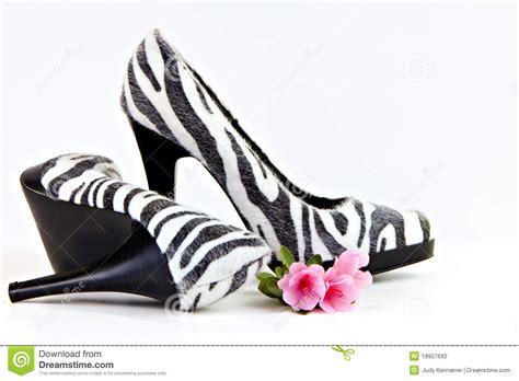 zebra high heel shoes zebra striped high heel shoes with azalea stock photo