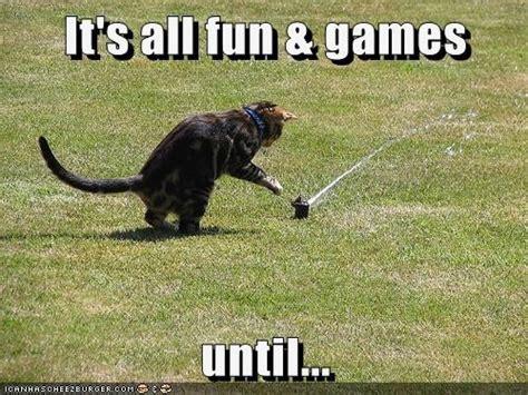 Dog Sprinkler Meme - 20 best silly sprinkler pets images on pinterest