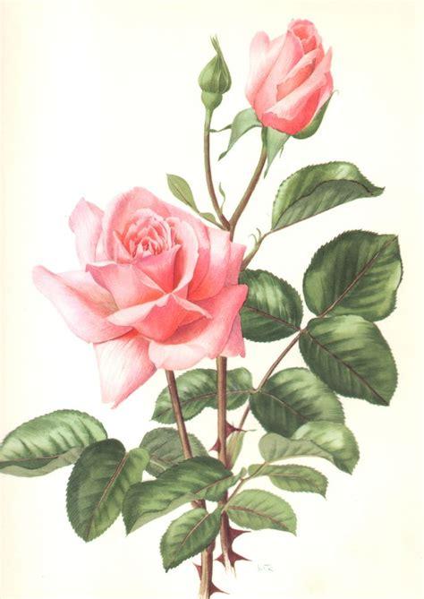 fiori acquarello pi 249 di 25 fantastiche idee su dipingere fiori su