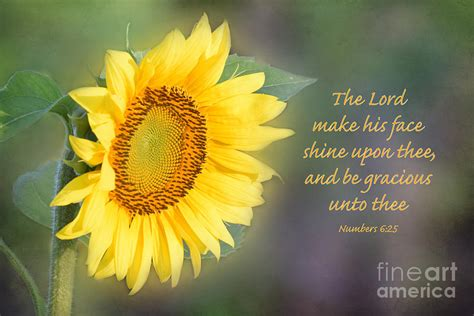 genesis 3 16 meaning sunflower with bible verse photograph by deborah berry