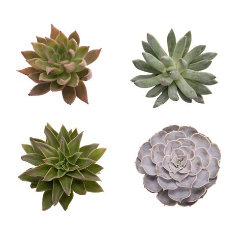 medium succulents assorted succulents types of flowers flower muse