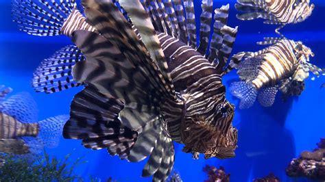 ocean life fish  wallpaper hd wallpapers