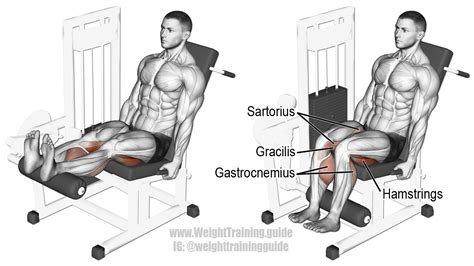 leg curl seduto seated leg curl exercise and weight