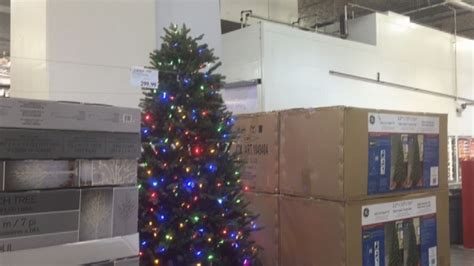 costco christmas trees live in august festive trees already on sale at costco ctv vancouver news