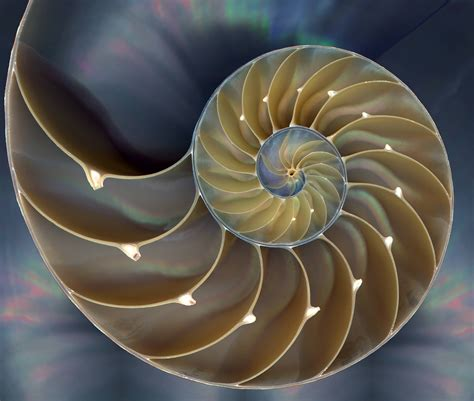 nautilus shell kirlian photograph photograph what is the soul 13 definitions to consider