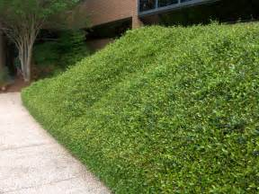 planting on slopes ground covers jacksonville lawn care