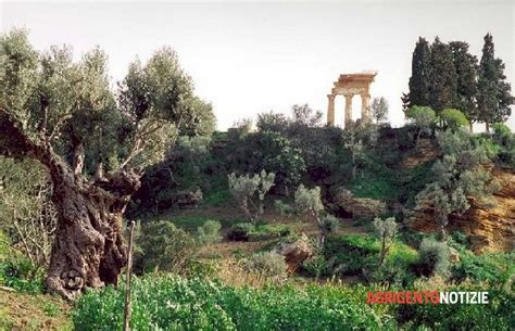i giardini delle agrigento giardino della kolymbethra miti ed eroi
