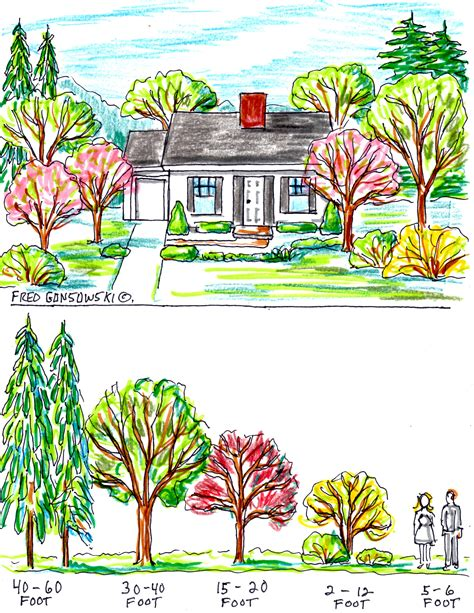 some ideas about planting trees by your house for curb