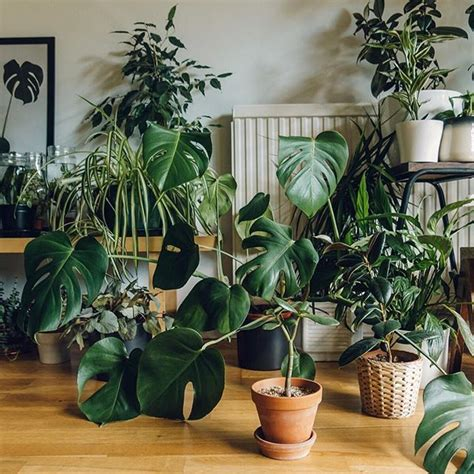 atchriistii  images indoor plants plants plant decor