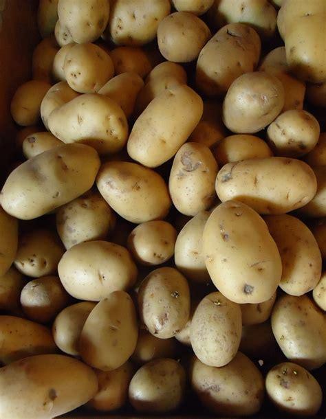 Potato Wiki by Potato Paradox