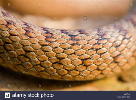 with snake scales stock image image of human design 31920181 snake scale stock photos snake scale stock images alamy