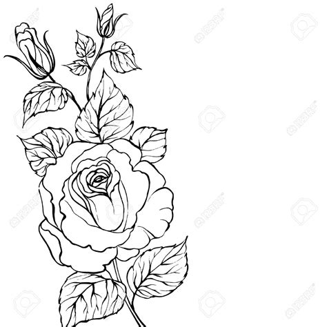 outline of rose tattoo flower outline drawing tattoos outline