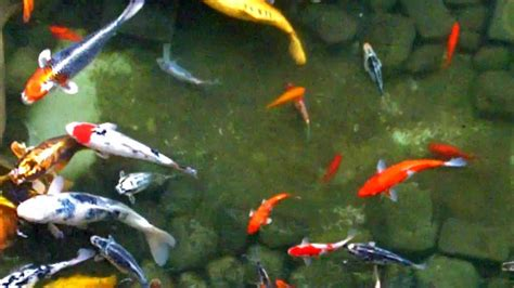 fish colors color fish